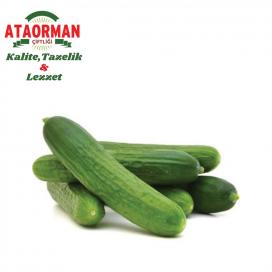 Salatalık Kg