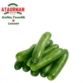 Salatalık (Silor) Kg