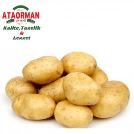 Patates Kg