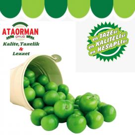Yeşil Erik Kg